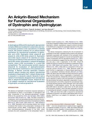 Ayalon, et al. Cell 135:1189 - UT Southwestern