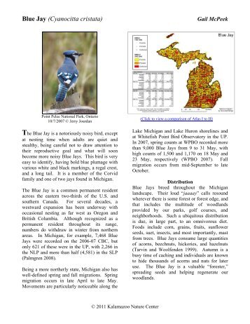 Blue Jay (Cyanocitta cristata) - Michigan Breeding Bird Atlas Website