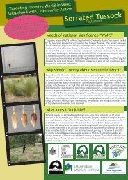 Serrated Tussock - South Gippsland Weeds
