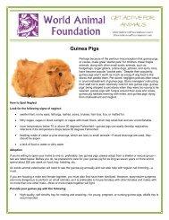Guinea Pigs - World Animal Foundation