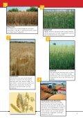 Vom Bauernhof zum Supermarkt  - information.medien.agrar eV - Seite 5