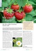 Wie wachsen Erdbeeren? - information.medien.agrar eV - Seite 6