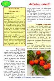 Arbutus unedo - Piante spontanee in cucina