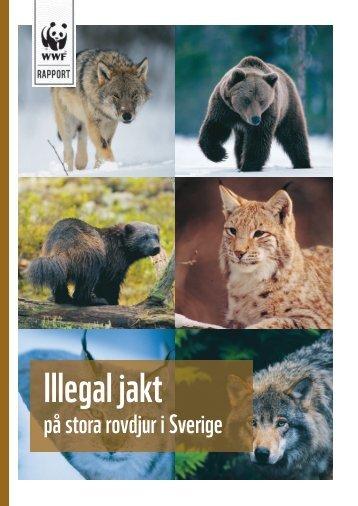 Illegal jakt på stora rovdjur i Sverige