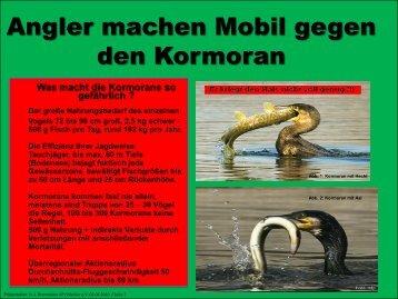 Kormorane an unseren Gewässern Wir fordern Taten statt ...