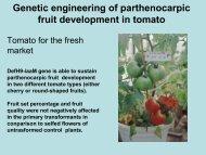 Genetic engineering of parthenocarpic fruit development in tomato