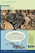 Bekassine - im Biotopverbund - Seite 2