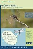 Bekassine - im Biotopverbund - Seite 4