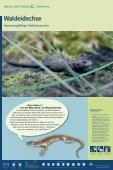 Bekassine - im Biotopverbund - Seite 6
