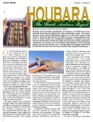 Houbara - Nwrc.gov.sa