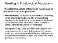 Feeding II: Physiological Adaptations - Biology Courses Server