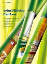 Focus - Industrialising Bamboo