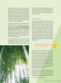 Focus - Industrialising Bamboo - Page 2