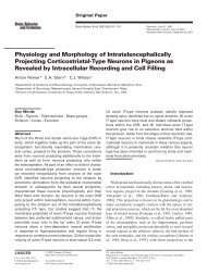 Physiology and Morphology of Intratelencephalically Projecting ...