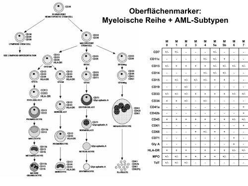 Entzündung-akute Phase-Proteine - Mtaschule-os.de