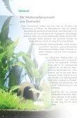 Nouveau - Dennerle - Page 2