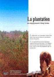 La plantation - Le Centre Régional de Propriété Forestière (CRPF)
