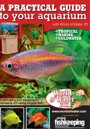A PRACTICAL GUIDE To Your aquarium - World of Water