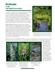 Wetlands of the Oak Ridge Reservation - Oak Ridge National ...