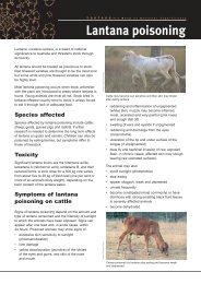 Lantana poisoning