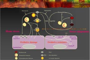Arterioscler Thromb Vasc Biol. 2010
