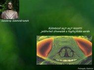 Különböző sejt-sejt közötti jelátviteli útvonalak a fogfejlődés során