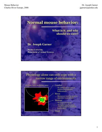 Normal mouse behavior: - Dietvet-Holistic Bevezetés
