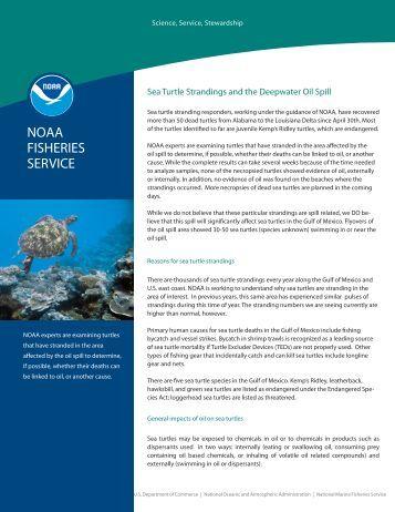 Sea turtle - Mote Marine Laboratory