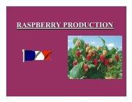France Raspberry Production