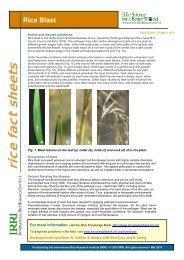 Rice Fact sheet - Rice Blast - Rice Knowledge Bank - International ...