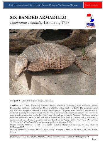 Smith P 2007 - FAUNA Paraguay Handbook of the
