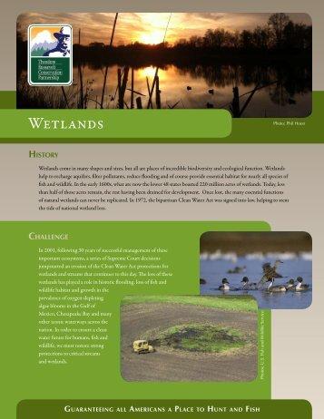 Wetlands Initiative