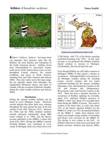 Killdeer (Charadrius vociferus) - Michigan Breeding Bird Atlas Website