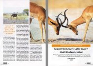 الحياة الفطرية في المملكة العربية السعودية - Nwrc.gov.sa