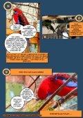 Birdvalley-Der Mythos - Seite 4