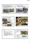 Determinace a biologie chráněných a CITES živočichů ... - KZR - Page 3