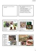 Determinace a biologie chráněných a CITES živočichů ... - KZR - Page 4