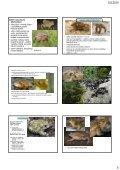Determinace a biologie chráněných a CITES živočichů ... - KZR - Page 5