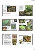 Determinace a biologie chráněných a CITES živočichů ... - KZR - Page 6