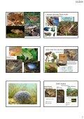 Determinace a biologie chráněných a CITES živočichů ... - KZR - Page 7