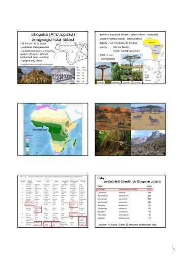 Etiopská zoogeografická oblast - KZR