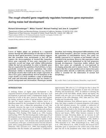 The rough sheath2 gene negatively regulates homeobox gene ...