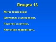 Лекция 13