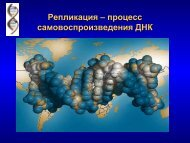 Фрагмент полинуклеотидной цепи ДНК