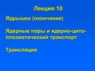 Число ядрышковых организаторов
