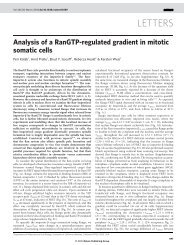 Analysis of a RanGTP-regulated gradient in mitotic