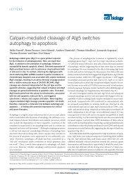 Calpain-mediated cleavage