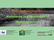 Artenschutzprojekt Kleinfische & Neunaugen Oberösterreich