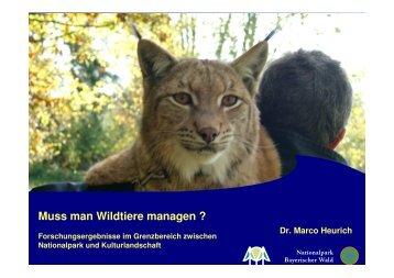 Muss man Wildtiere managen ?