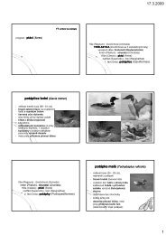 Cvičení ptáci 1 - KZR